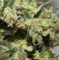 New York Power Diesel fem 5