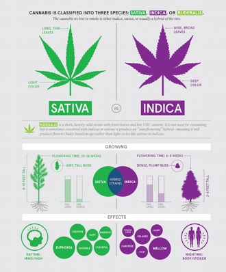 Difference of Sativa, Indica and Ruderalis