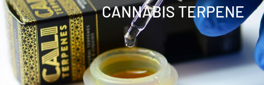 Cannabis-Terpene online kaufen bei Cannapot