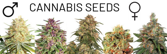 order cannabis seeds online at cannapot