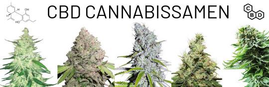 verschiedene-cbd-hanfsorten-cannabis-mit-viel-cannabidiol