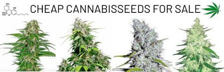 cheap-cannabisseeds-for-sale-reduced-weedseeds